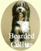 Bearded Collies paintings - Dog portraits by Isabel Clark, pet portraits artist.