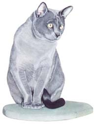 Pet Portraits - blue Burmese Cat in Watercolours