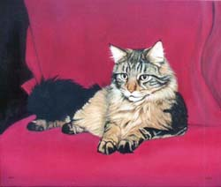 Cat paintings in oils and watercolours by Isabel Clark