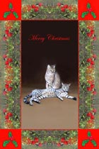 cat Greeting Cards and Cat Christmas Cards