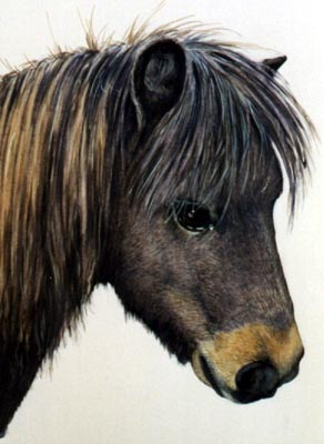 Pet Portraits - Horse & Pony Paintings from Your OWN photos - Brown Pony painted in Watercolours