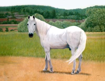Horses and Ponies - Paintings by Isabel Clark, pet portraits artist.