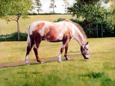 horse_lucy_in_field