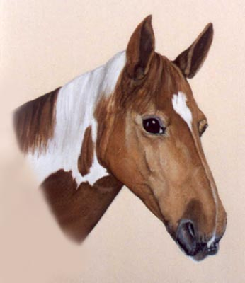 Pet Portraits - Horse and Pony Paintings from Your Favourite Photos - Head Study in Watercolours