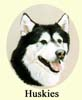 Click for more Images of Huskies paintings