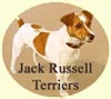 Click for More Images of Jack Russell Terriers dog paintings