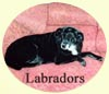 Click for More Images of Labrador Retrievers dog paintings