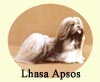 Click for More Images of Lhasa Apsos dog paintings