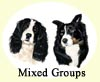 Click for more Images of Border Collies dog paintings