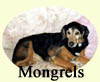 Click for More Images of Mongrels dog paintings