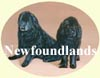 Click for More Images of Newfoundland dog paintings