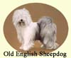 Click for more Images of Old English Sheepdogs - dog paintings