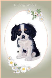 Cavaliers King Charles Spaniels paintings - pet portraits and dogs greeting cards