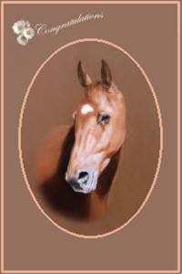 pet portraits - Horse paintings and animal horse and pony cards