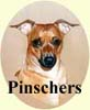 Click for more Images of Pinscher dog paintings
