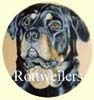 Click for more Images of Rotweilers - dog paintings