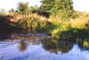 The pond in Conways field - July 1992 - Photo