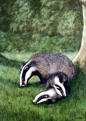Pet Portraits and Animal Paintings - Badger and Cubs in Moonlight